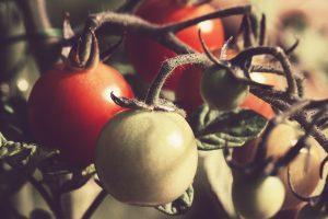 tomato-676532_1920