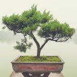 bonsai method, ableton, production, technique, pheek, techno