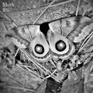 [BF005] Moth by lIS, Mačka