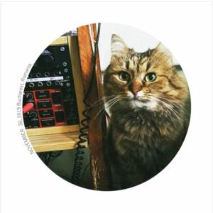 Average Joe – Cool Cat